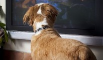 DogTV provides companionship for man's best friend