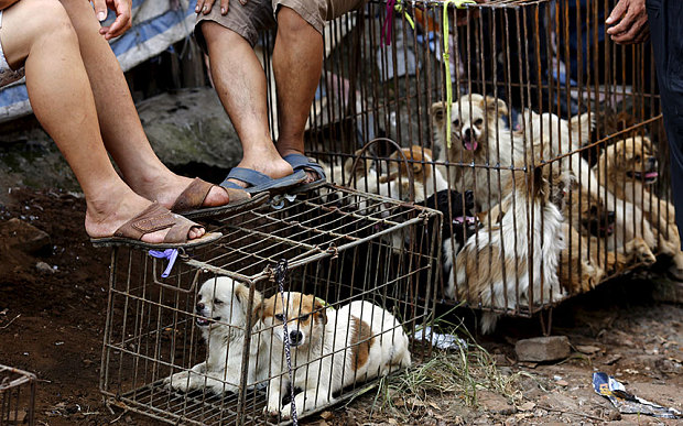 Thousands of dogs and cats slaughtered at China festival ...